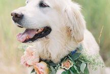 Pets In Weddings / Pets In Weddings