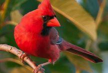 I'm a bird... say I'm a bird!