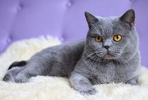 Genetyka kotów / Wszystko o dziedziczeniu u kotów