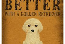 golden retriever / Love gold