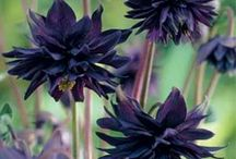 Flowers / by Karla Hunt