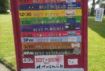 Greathouse Dog Show 2017 / Greathouse Care Home Kington Langley. Annual Dog Show 2017