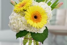 Easter / Send Easter Flowers, Plants or gifts with Blossom Flower Shops of White Plains & Yonkers, New York. http://www.blossomflower.com/occasions/easter-flowers-yonkers-white-plains-ny/