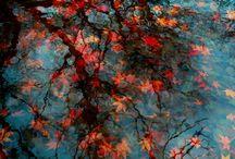 Season|autumn