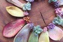 •succulents•