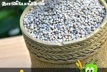 பாரம்பரிய தானியங்கள் | Tamil traditional Cereal | Chellame Chellam