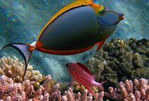 Μέσα στη θάλασσα - under water