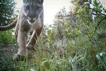 Wildlife in Boulder / by BEST WESTERN PLUS Boulder Inn
