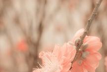 >blooms<