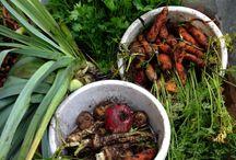 Jannes Have - køkkenhaven / Min køkkenhave er til dyrkning af familiens grøntsager, men den æstetiske værdi er næsten ligeså vigtig. Her dyrkes grøntsager pga. farver og former side om side med blomster.