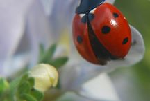 I love Ladybirds