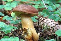 Pilze Fungi / by Pol Sandeman