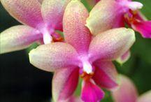 Orchidej-orchids an butterfly-Mendel university Brno Czech republic