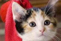 Kediler & Cat's ❤️☘