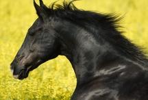 Equestrian files