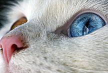 Pets / by Brandi Williams