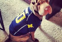 Let's Go (Bark) / Dedicated to dogs decked out in Michigan Maize & Blue.  / by Michigan Athletics