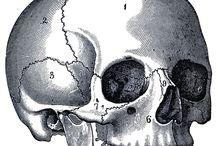 Skull and Bone Society / Beautiful dead things.
