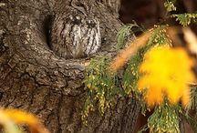 Tatto / Nature camouflage....