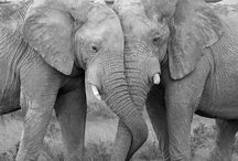 Elephants <3 <3 <3