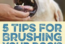 Dog Health And Tips / This board will contain tons of tips on dog health, dog oral hygiene and much more!