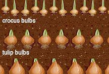 rośliny i ich sadzenie