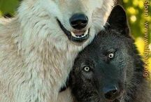 rettet die Wölfe