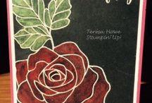 SU : Rose Wonder