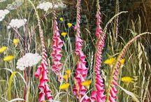 "Malerin ""Mary Dipnall"" / Wildflowers"