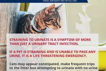 Common Pet Emergencies
