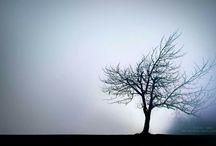 Melancholia-Beauty sadness