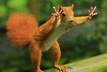 Funny animals / Cute animals, Funny animals, animals