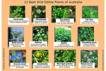 BUSH TUCKER / Edible plants in Australian outback and around the traps.