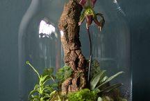 plants under glass / by Robin Goeke Hope