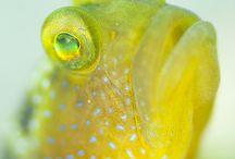 Elämää vedessä.. kalat ym.