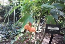 Plants / Lurie Wildflowers Garden, Millennium Park, Chicago, Illinois USA
