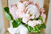 Flowers & bouquets / flowers