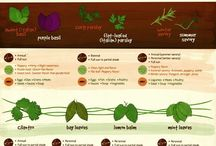 Growing Herbs and Vegetables