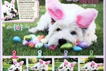 Molly-Dog layouts