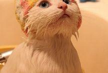 Can't resist....too cute <3