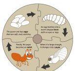 djurs livscykel