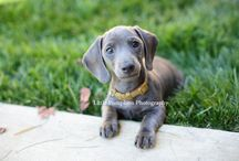 Faithful Hounds / Dogs, Puppies, Dog photos and cute pups