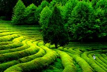 Green Earth / Our wonderful green planet earth, beautiful and precious home to all of us. Here are some inspiring lush green shots of Mother Nature in all her glory. / by Absolutely Pure