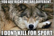 Animal Ethics / In a different world where trophy hunting and cruelty to animals do not exist.