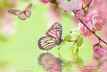 Sommerfugl/ Butterfly