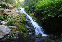 """Northern California Day Hikes / """"So extraordinary is Nature with her choicest treasures, spending plant beauty as she spends sunshine, pouring it forth into land and sea, garden and desert. And so the beauty of lilies falls on angels and men, bears and squirrels, wolves and sheep, birds and bees...."""" - John Muir"""
