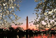 Spring in DC / A board all about springtime in the #DC metro area.