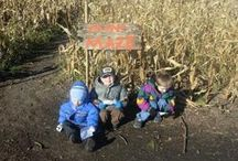 Cornmaze / The cornmaze is fun for all ages.  Children 6 and under can enjoy the mini maze for just $1 and takes about 15 minutes.  The big maze is fun for the whole family - all ages and can be completed in about 1-2 hours.    For mor information see:  www.pumpkinvillecornmaze.com