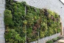 Vertical garden / Ideas for my 2015 project
