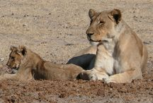 The Kenyan Wilderness / Take a front row seat and witness the action as it unfolds in the wild